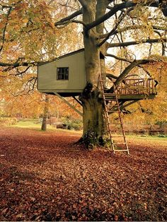 Build a Tree House.