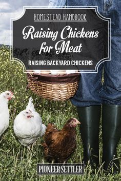 Check out Raising Chickens For Meat [Chapter 9] Raising Backyard Chickens - Homestead Handbook at http://pioneersettler.com/raising-chickens-for-meat-chapter-9-raising-backyard-chickens-homestead-handbook/