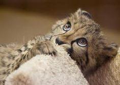 super schattige kleine baby dieren - Google zoeken