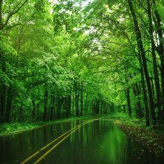 дорога через ліс після дощу Мічіан