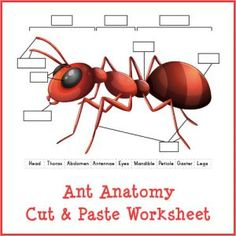 Ant Anatomy Cut and Paste