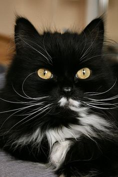 Beautiful cat!