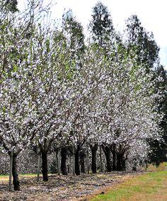 PASEO EN EL TIEMPO Te llevaremos a un viaje a través del tiempo en un carruaje de colección entre nuestros olivares de las Colinas de Garzón. http://experienciasgarzon.com/site/?page_id=145&lang=es