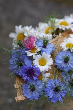 #nigella #buchetalbastru My Flower, Flowers, Nigella, Flower Arrangements, Bouquet, Garden, Plants, Floral Arrangements, Garten
