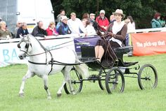 Photo Archive Royal Welsh Show Driving - Wagons-Sec A 2011 : Rainhill Welsh Cobs