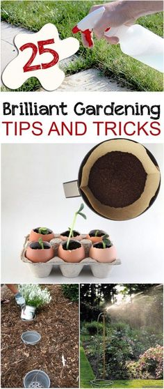 25 Brilliant Gardening Tips and Tricks
