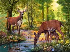 Woodland stream - Other Wallpaper ID 1752519 - Desktop Nexus Abstract