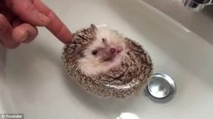 """""""Jawn, this is hardly time for a bath!"""""""