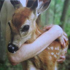 Lil Buckeroo ♥s this baby deer