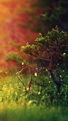 iPhone 5 Wallpaper #iPhone5,#Wallpaper,#Nature