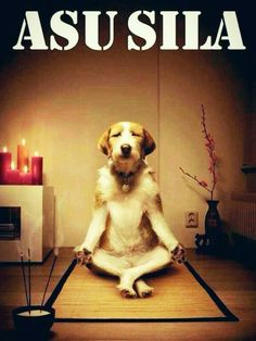 7 Ways of Dog Anxiety Treatment – E collar - Windig Heute Lustig Funny Shit, Funny Cute, Funny Jokes, Cartoon Jokes, Sarcastic Pictures, Funny Pictures, Animal Pictures, Reiki, Dog Anxiety