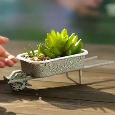 Two awesome DIY Succulent Gifts! - Succulent City Two awesome DIY Succulent Gifts! Succulent Gifts, Succulent Gardening, Succulent Terrarium, Planting Succulents, Succulent Ideas, Succulent Care, Mini Cactus Garden, Succulent Plants, Succulent Containers Ideas