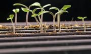 No seed companies sell GMO seeds to home gardeners -- whether the company publicly states it or not.