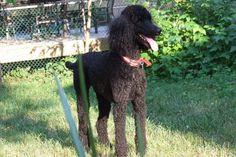 Theo (RIP 2003-2015) Babies, Dogs, Animals, Animales, Babys, Animaux, Pet Dogs, Newborn Babies, Doggies