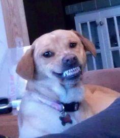 O sorridente