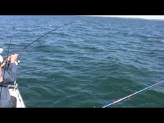 How to Catch Bluefish, Bigger Bluefish, and More Bluefish - Saltwater Bl...