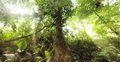 Never Been to the Jungle? Check Out This Wild 360-Degree Video