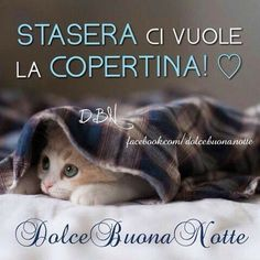 Italian Memes, Good Morning Good Night, The Hobbit, Love Quotes, Humor, Genere, Dolce, Snoopy, Italy