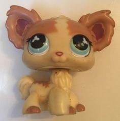 Littlest Pet Shop Chihuahua Dog 765 Tan Yellow w Blue Clover Eyes | eBay