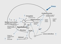 Trauma's effect on the brain