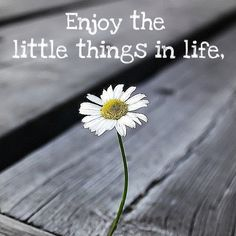 Enjoy the little things in life Favorite Words, Favorite Quotes, Favorite Things, Teen Qoutes, Daisy Love, Perfect World, Positive Words, Simple Pleasures, Faith Quotes