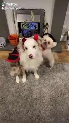Cute Little Animals, Cute Funny Animals, Funny Dogs, Funny Animal Videos, Funny Animal Pictures, Videos Funny, Cute Puppies, Cute Dogs, Baby Animal Videos
