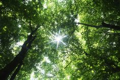 Sun through tree leaves...dappled light falling into your eyes...relaxation.