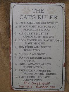 It would be cute to have a cat rule post r and a dog rule poster done nicely in the hall or something.