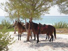 Rancho Baxaal beach riding - Playa del Carmen, Mexico