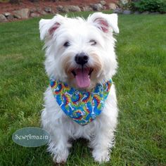 This groovy dog bandana has brightly colored spirals in blue, red, yellow and green, accented with white doggie bones and paw prints | SewAmazin @sewamazin