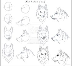 How to draw wolf heads