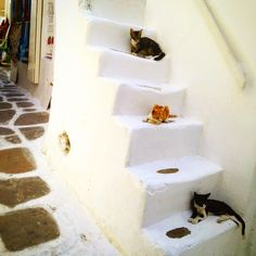 """""""These cats definitely understood the importance of personal space!  Came upon them chilling out in the shade on the beautiful island of Santorini!…"""""""