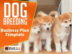 157 best business plan templates images on pinterest in 2018 dog breeding business plan template accmission