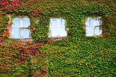 Mohammad Azouz Photography Architecture Beauty In Nature Creeper Plant Day Flower Grass Green Color Growth Horizontal Ivy Nature No People Outdoors Plant Sky Sunlight Tree Window