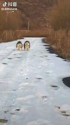 Cutest pair of floofs