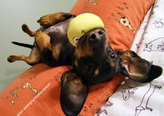 Rub the tummy or throw the ball.. I'm good with either !