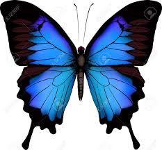 Resultado de imagen de dibujo mariposa monarca azul