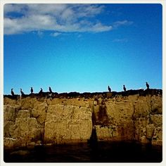 Farne Islands, Northumberland, EN