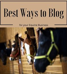 Should your equine business be blogging? Of course it should! Creating unique and relevant blog content is a great way to reach your target horse riding and owning audience!