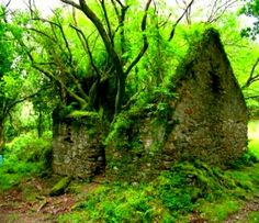 Old ruins ....wonder what it looked like before Mother nature took back the space....