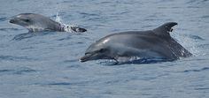 New Report Confirms Captive Dolphins can be Successfully Returned to the Wild