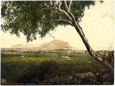 Palermo Panorama from S. Ciro Rare original photochrome Libreria Reber 1890 L298
