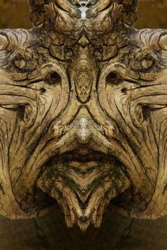 Italian photographer Elido Turco taking photographs of tree bark and then mirroring the photographs discovered a whole society of Dream Creatures Green Man, How To Make Trees, Tree Monster, Cave Drawings, Tree People, Tree Faces, Tree Bark, Tree Tree, Reflection Photography