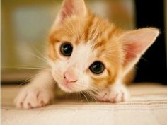 Why Spreadsheets Are Cuter Than Kittens - Part 1
