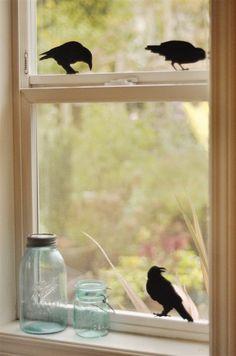 Love the black birds