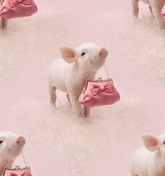 Diva piggy!