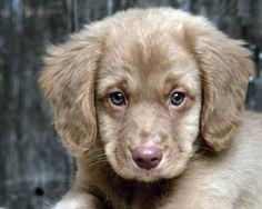 Raças de Cachorros Pequenos - Confira Nossas Fotos e Apaixone-se