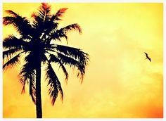 Color de verano!