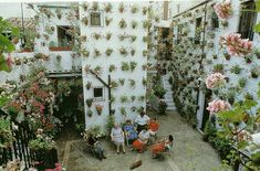 An insanely unique Pelargonium garden.  How do they water all those pots?!!!