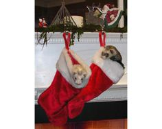 stockings http://www.sluniverse.com/php/vb/off-topic/77464-ferrets-couldbe-4.html
